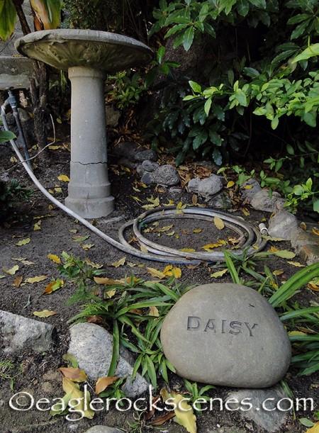 RIP Daisy