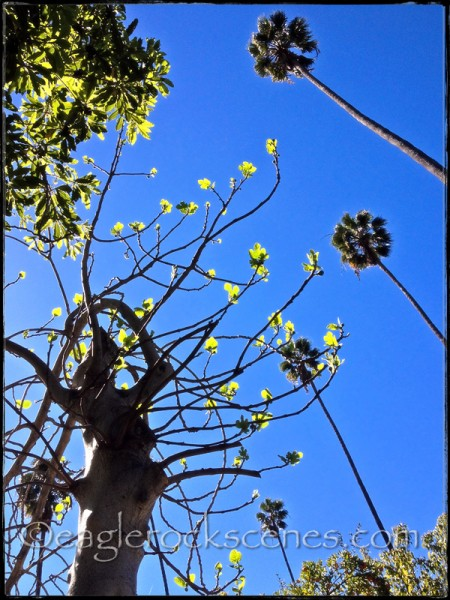 Signs of spring in Eagle Rock