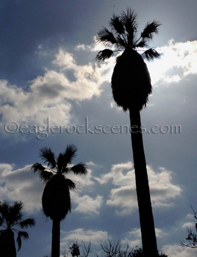 Palm Trees Against the Clouds