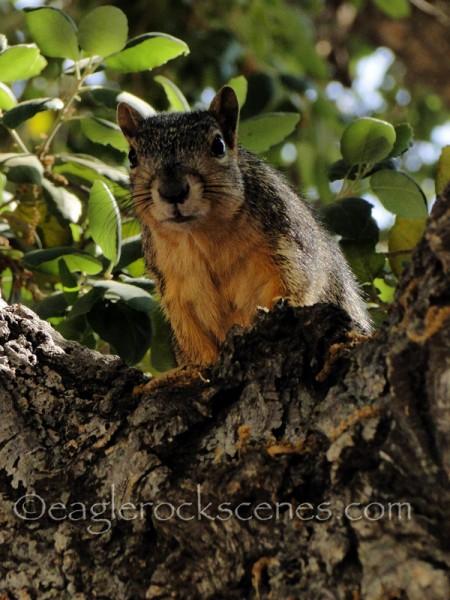 Close up of squirrel