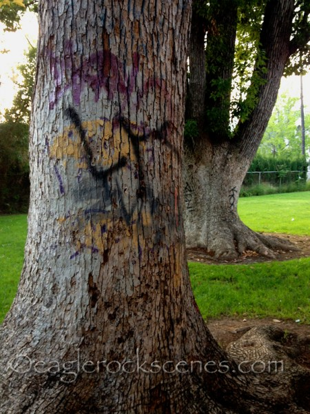 Tree graffiti