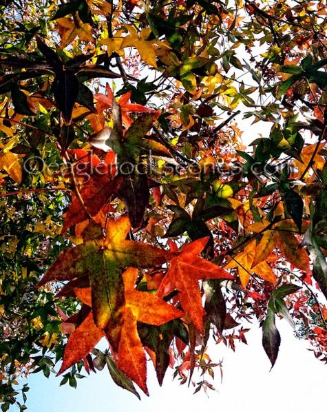 Leaves like jewels