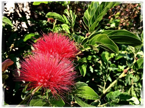 Fuzzy red flower