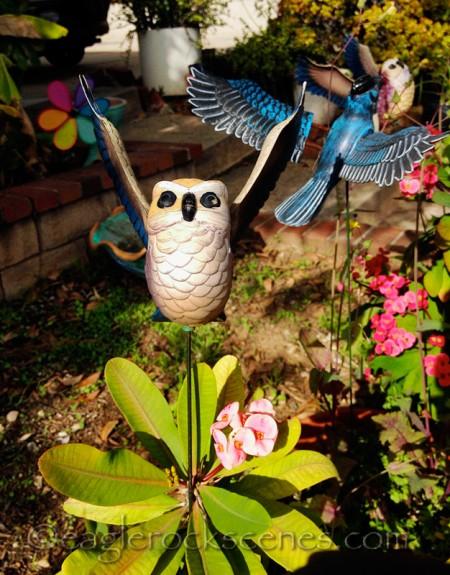 Lawn Owl
