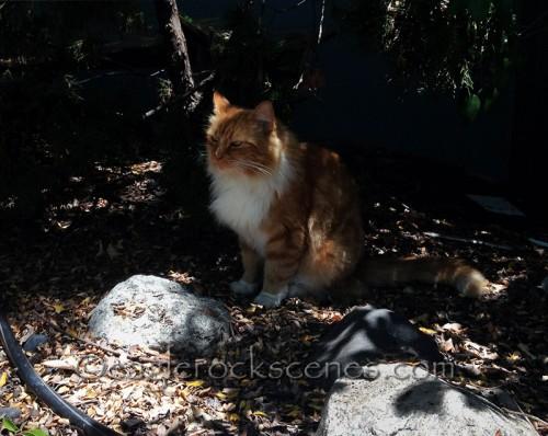 A random displeased Eagle Rock cat
