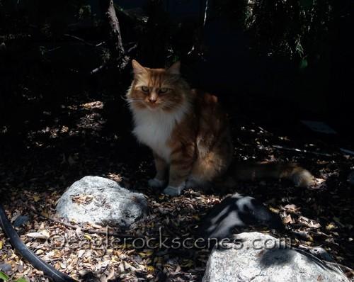 A random Eagle Rock cat