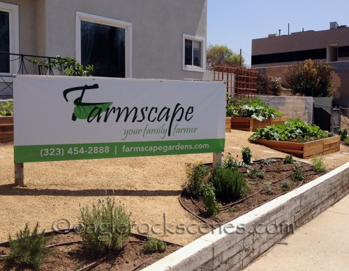 Farmscape creates urban farm gardens