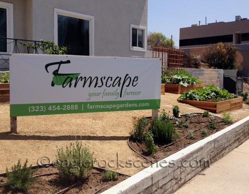 Farmscape creates urban farm gardens