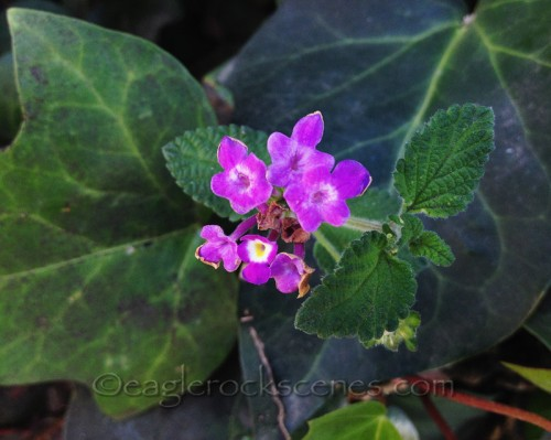 Unidentified little violet flowers