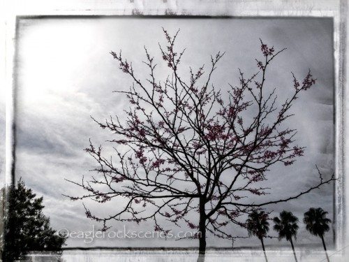 Cloudy Day with Tree