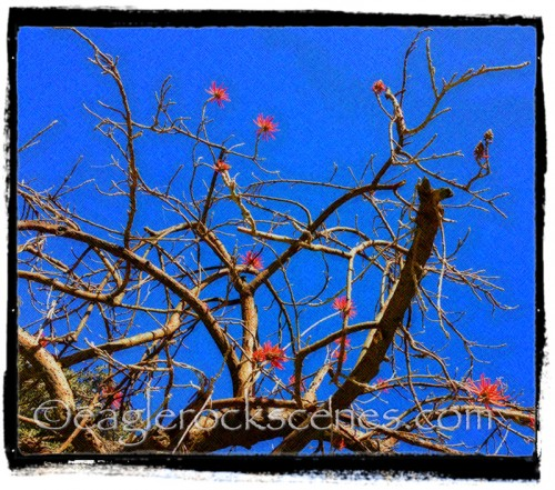 Blooming branches, arty
