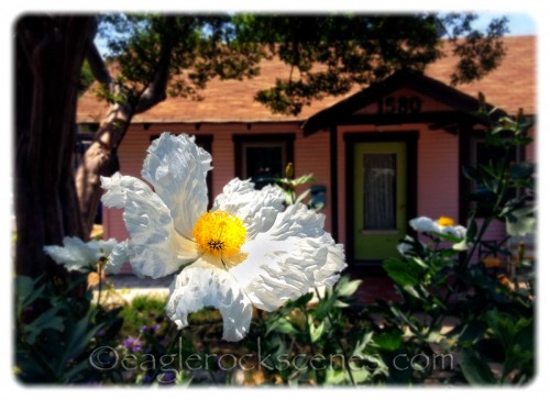 Ripple-y flower in front of craftsman house