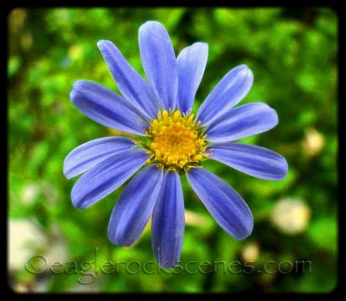 Small Flower, macro