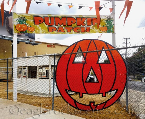 Pumpkin patch on Colorado Blvd.