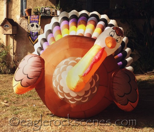 Thanksgiving Blow-Up Turkey Number Two