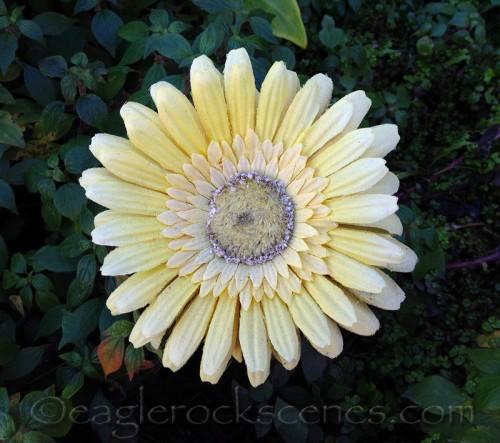 faux flower in a real garden