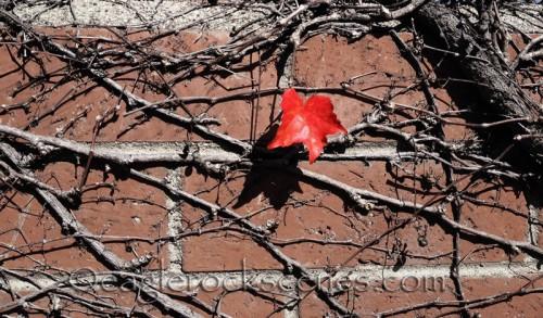 Brick Wall with leaf