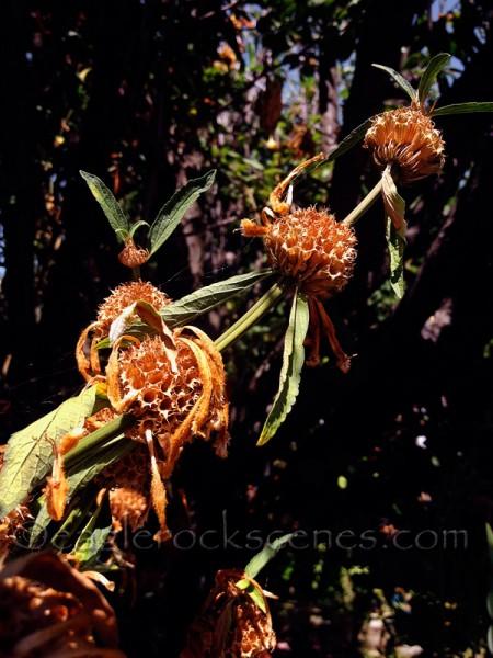 Flower Pods