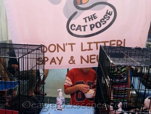 The Cat Posse